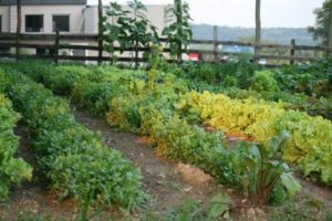 Hemlock Hill Farm Cortlandt Family Garden